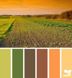 harvest-blog